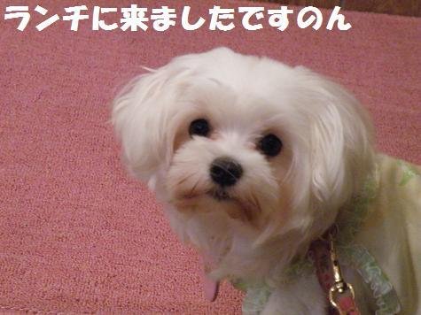 2008_10090002.jpg