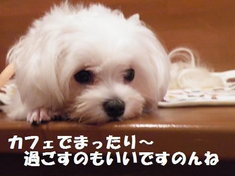 2008_10090015.jpg