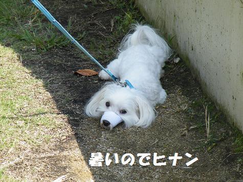 2008_10090043.jpg
