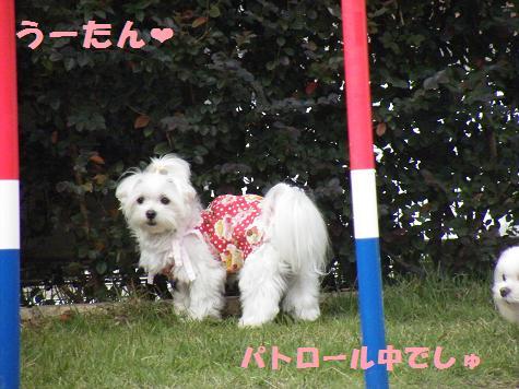 2008_10180054.jpg