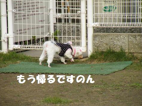 2008_10180075.jpg