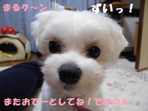 2008_11030026.jpg