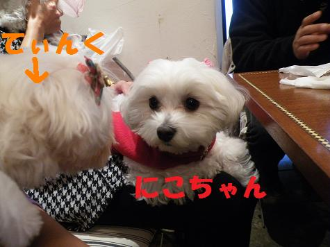 2008_12090107.jpg