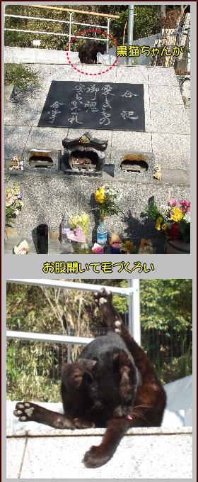 墓標と黒猫