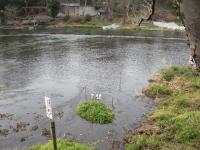柿田川中流