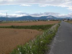 麦畑の中を走ります