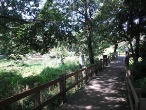 柿田川公園内の散策路