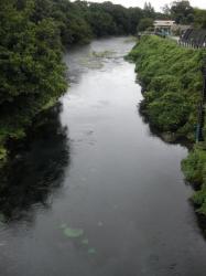 柿田橋から