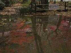 池に写る逆さの紅葉