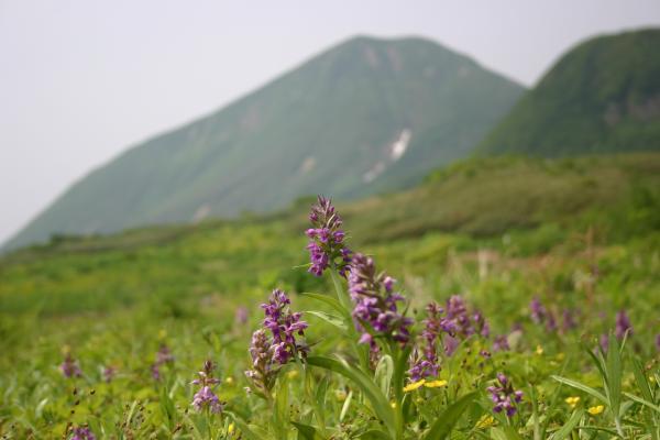 八合目三界山