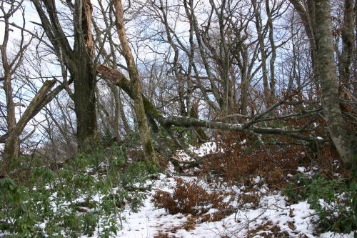 被害木 1