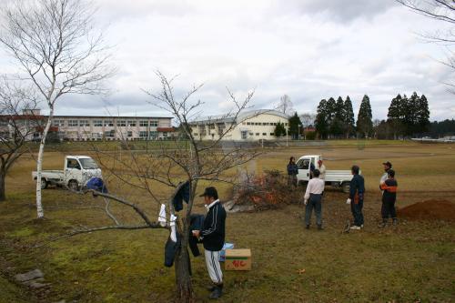 桜剪定 5