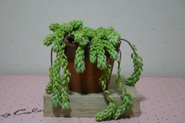 多肉植物5