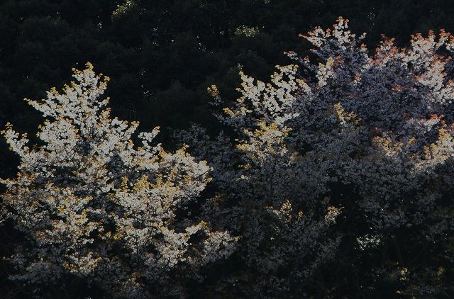 200903151.jpg