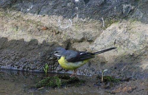 湯の森林公園の野鳥達