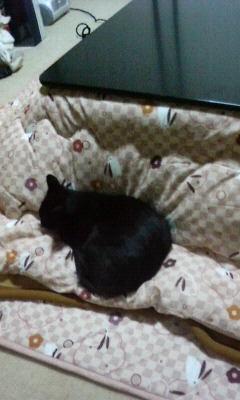 kotatsu0.jpg