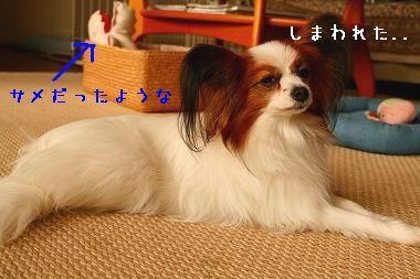IMG_6091a.jpg