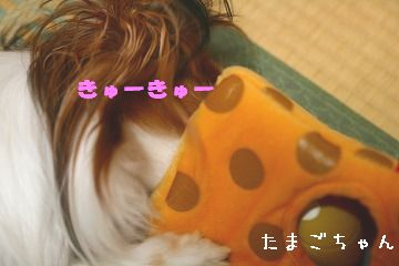 IMG_7455a.jpg