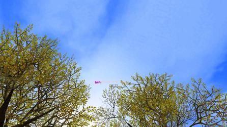 SRO[2012-02-08 00-20-51]_48
