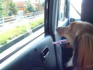 車の窓ガラス、ヨダレでベタベタやん・・・。