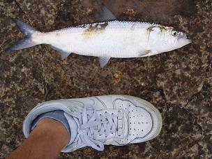 釣り日和 (5)