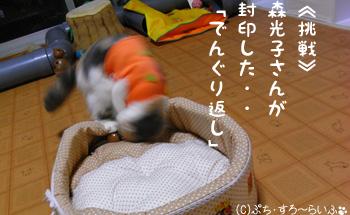 080330-runa2.jpg