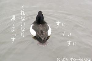 080317-4のコピー