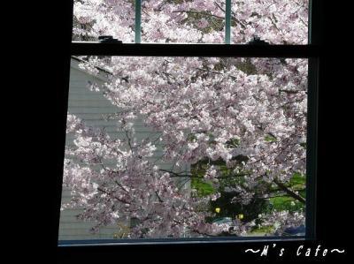 桜さくら1