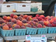 Farm Market11