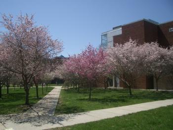 桜2007-2