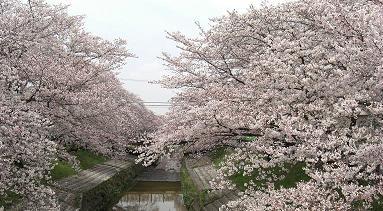 大和高田・大中公園0405a