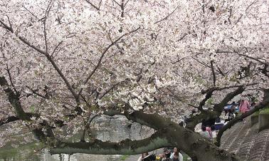 大和高田・大中公園0405b