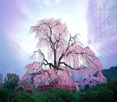 spring_2006_02_img_001.jpg