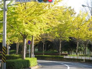 2009-11-3-5.jpg