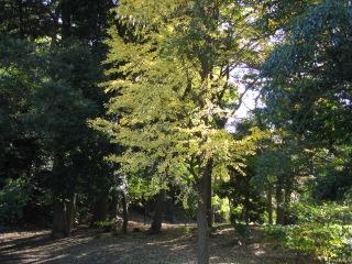 2009-11-8-22.jpg