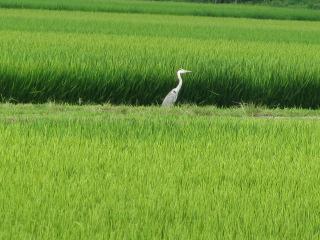 会津の風景6