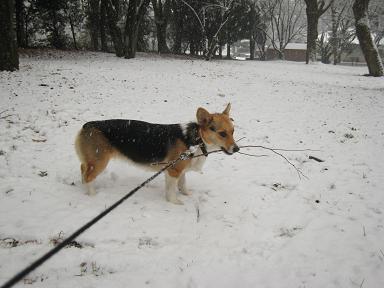 雪より枝よぉ~