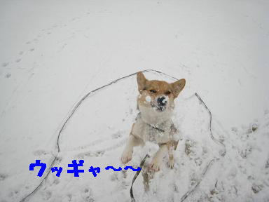 雪なんて~~キライ~~