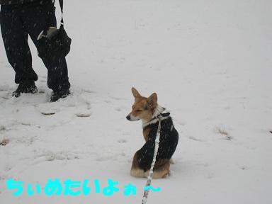 雪・・・ちゅめたい・>。<