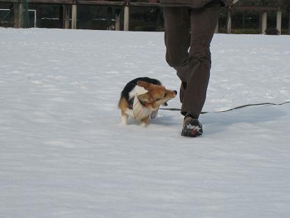 雪~ガァウ~~~