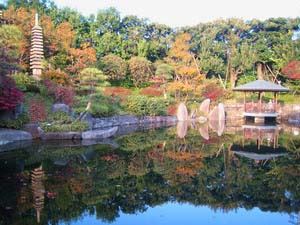 目白庭園 秋紅葉