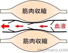 筋肉ポンプ 図解1