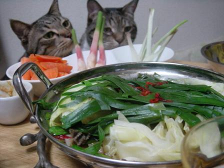 猫とモツ鍋