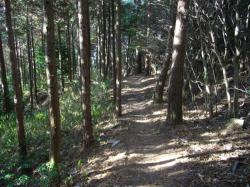 照葉樹林にて
