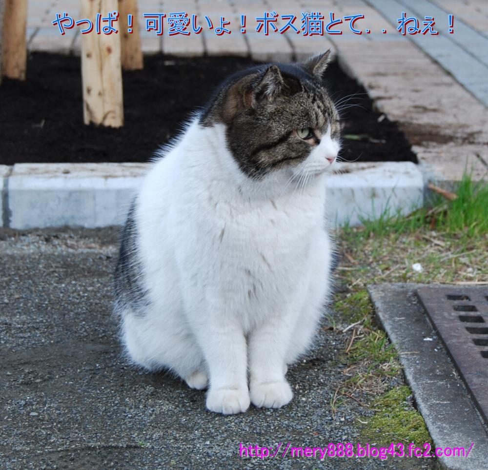 ボス猫とてかわいいじゃん!