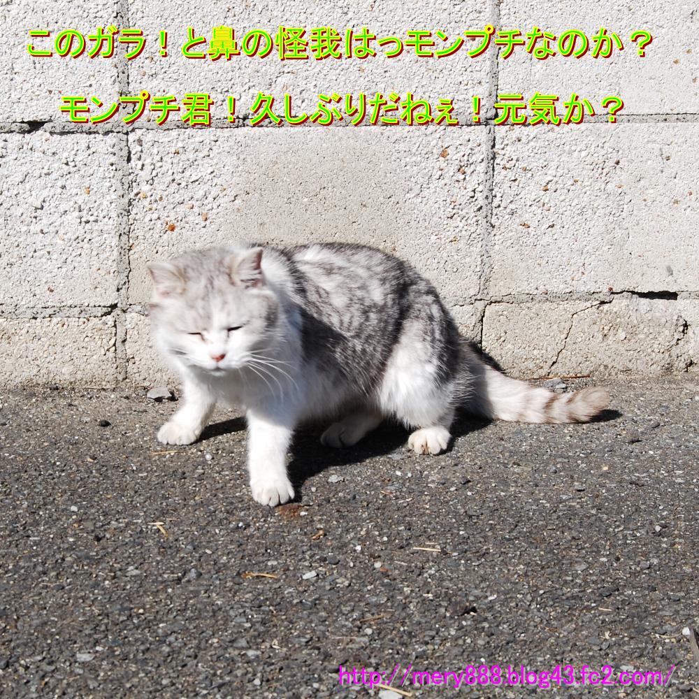もんぷち001