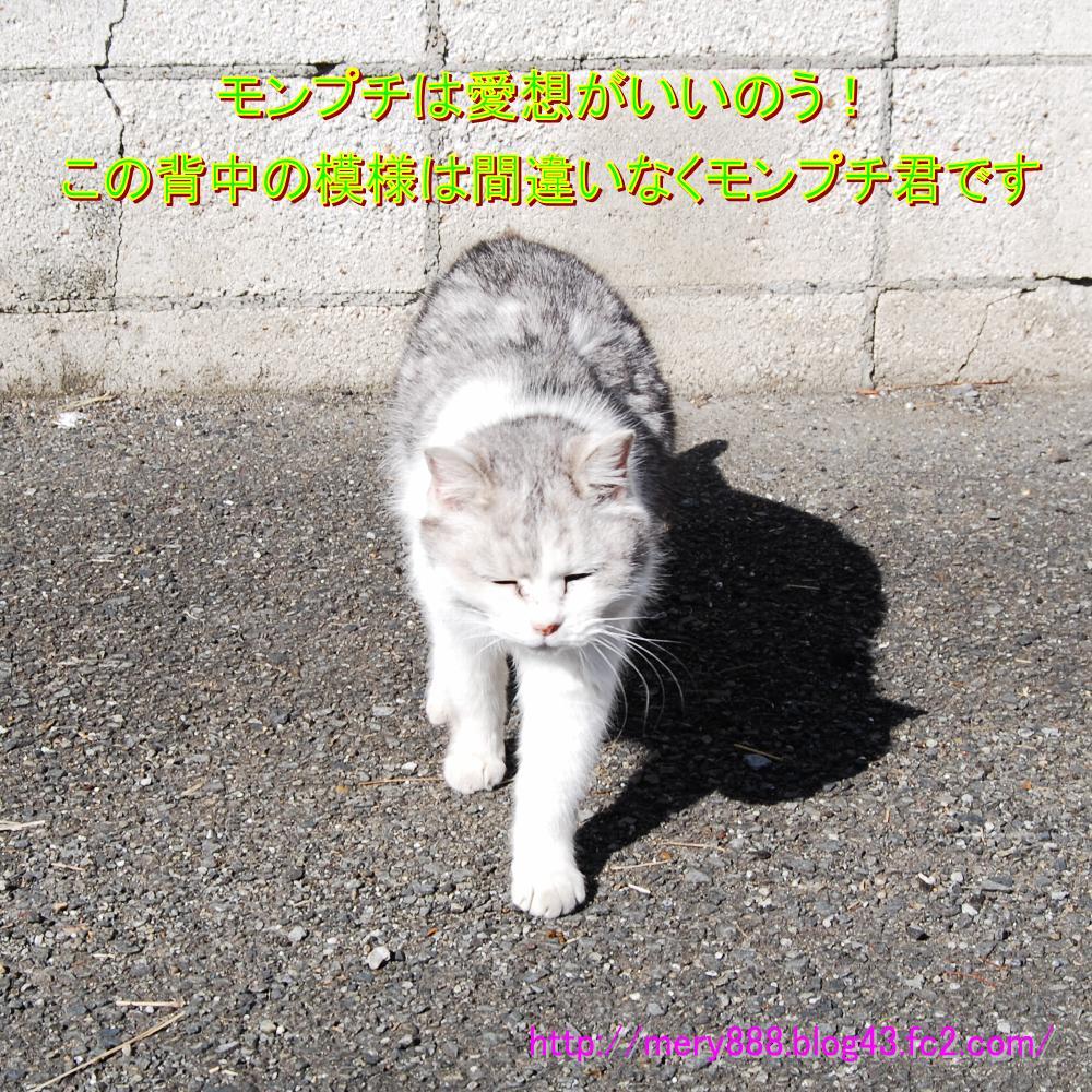 もんぷち002