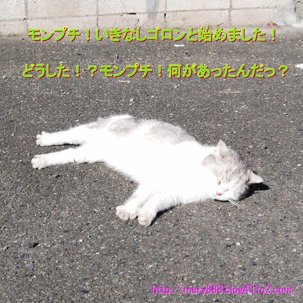 もんぷち003