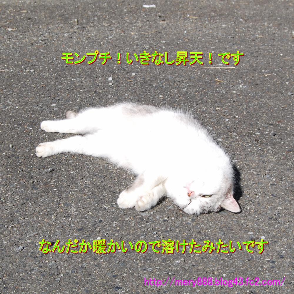 もんぷち004