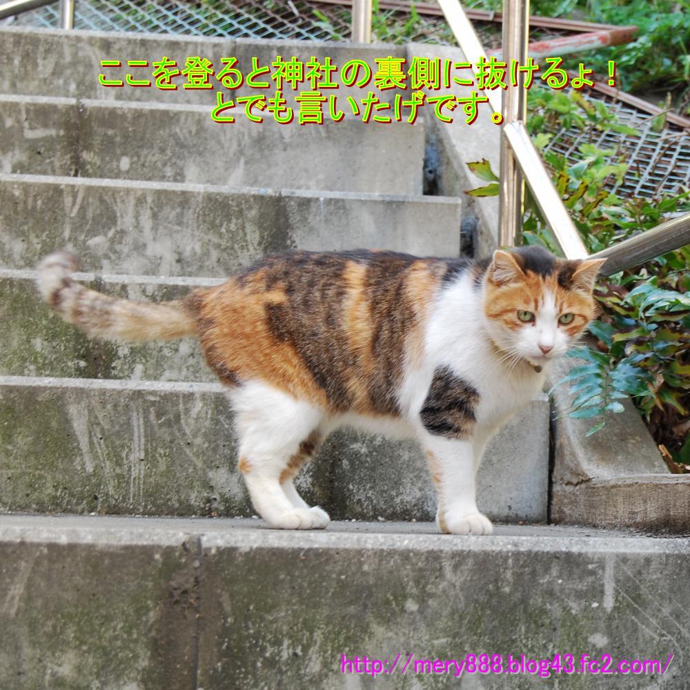 江ノ島飼い猫002